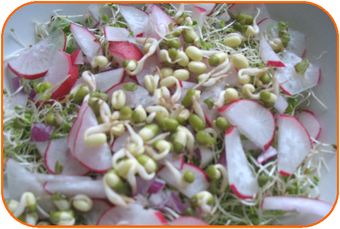Alfalfa Mung Bean and Radish fresh wet and wild